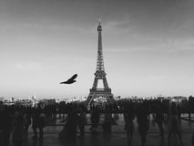 Eiffel Tower, Paris, France in black and white Royalty Free Stock Image