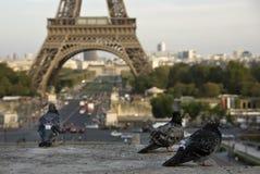Eiffel tower, Paris ,France Royalty Free Stock Photos