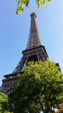 Eiffel Tower, Paris. Eiffel Tower and green trees, Paris, France Royalty Free Stock Photo