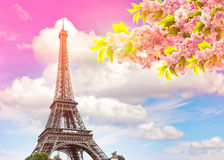 Eiffel Tower Paris sunset sky. Blossoming spring cherry tree. Eiffel Tower Paris against colorful blue sunset sky. Blossoming spring cherry tree. Vintage style stock image