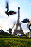 Eiffel Tower Pigeons Stock Images
