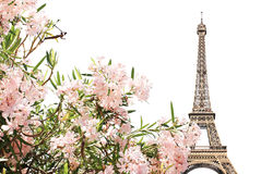 Eiffel tower and pink flowers. Famous landmark of Paris - Eiffel tower and pink flowers. Isolated on white background Stock Photos