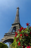 Red roses by the Eiffel Tower, Paris, France Royalty Free Stock Photos