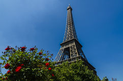 Red roses by the Eiffel Tower, Paris, France Royalty Free Stock Photography