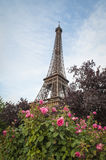 Eiffel Tower and red roses Stock Photography