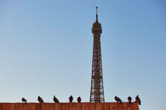 Eiffel tower seen over the roof with many pigeons Stock Photos