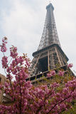 Eiffel tower spring Stock Photography