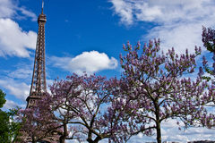 The Eiffel Tower in the Spring Stock Image