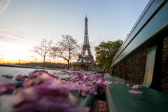 Eiffel Tower with spring leaves in Paris, France Stock Images