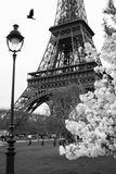 Eiffel Tower with spring park, Paris, France Royalty Free Stock Images