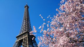 Eiffel Tower in spring time, Paris Stock Photo