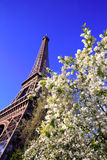 Eiffel Tower in spring time Royalty Free Stock Photography