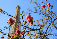 Eiffel Tower in spring time, Paris. France royalty free stock photos