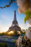 Eiffel Tower with spring tree in Paris, France Royalty Free Stock Photography