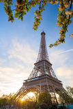 Eiffel Tower with spring tree in Paris, France Stock Photography
