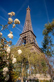 Eiffel Tower with spring tree in Paris, France Royalty Free Stock Photo