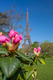 Eiffel Tower with spring tree in Paris, France Stock Photo