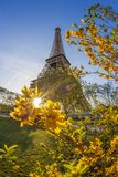 Eiffel Tower with spring tree in Paris, France Stock Images
