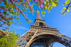 Eiffel Tower with spring tree in Paris, France Royalty Free Stock Image