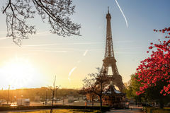 Eiffel Tower with spring tree in Paris, France Stock Image