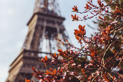 The Eiffel Tower Royalty Free Stock Photography