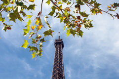 Eiffel Tower with Tree Stock Images