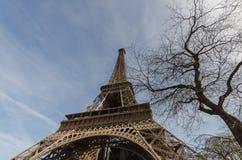 Eiffel Tower with tree. France, Europe. Eiffel Tower with tree and blue sky. France, Europe Royalty Free Stock Photos