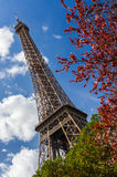 Eiffel Tower through trees Stock Photos