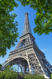 Eiffel Tower and trees Stock Photography