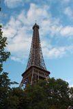 Eiffel Tower and trees Royalty Free Stock Image