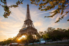 Eiffel Tower With Spring Tree In Paris, France Royalty Free Stock Photos