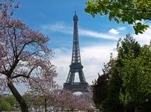 Eiffelen står hög fjädrar in Royaltyfri Bild