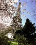 Eiffeltorn Cherry Blossom arkivfoton