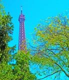Eiffeltorn med vårträdet i Paris, Frankrike Arkivfoto