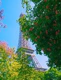 Eiffelturm mit Frühlingsbaum in Paris, Frankreich Stockfotos