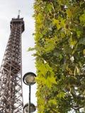 Eiffelturm und Baum Stockfotografie