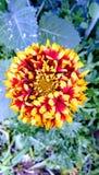 Eigen tuininstallatie en bloemen stock foto
