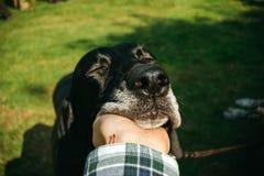 Eigenaar die zijn hond, bruine kurzhaar de jacht Duitse kortharige wijzer houden, royalty-vrije stock afbeeldingen