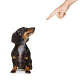 Eigenaar die zijn hond straffen royalty-vrije stock afbeeldingen