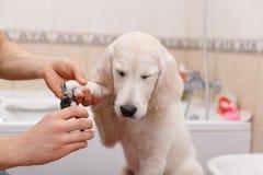 Eigenaar die zijn hond thuis verzorgen Stock Foto