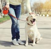 Eigenaar en gelukkige labrador retriever-hond die in openlucht lopen Royalty-vrije Stock Foto