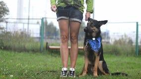 Eigenaar opleiding met hond stock footage