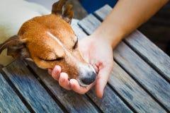 Eigenaar petting hond Royalty-vrije Stock Afbeelding