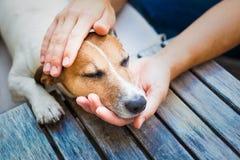 Eigenaar petting hond Stock Fotografie