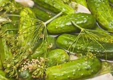 Eigengemaakte groenten in het zuur in pekel Royalty-vrije Stock Foto
