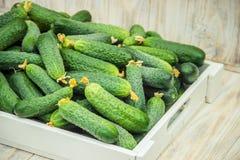 Eigengemaakte komkommercultuur en oogst in de handen van een kind stock foto's