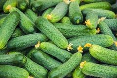 Eigengemaakte komkommercultuur en oogst in de handen van een kind stock afbeeldingen
