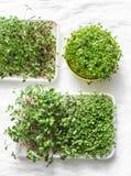 Eigengemaakte micro- greens op een lichte achtergrond, hoogste mening Gezond het dieetconcept van de voedsellevensstijl Vlak leg royalty-vrije stock foto's