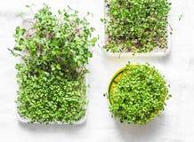 Eigengemaakte micro- greens op een lichte achtergrond, hoogste mening Gezond het dieetconcept van de voedsellevensstijl Vlak leg stock fotografie
