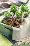 Eigengemaakte Plantaardige Salade Royalty-vrije Stock Fotografie